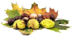 De samenstelling van de herfst Royalty-vrije Stock Foto's