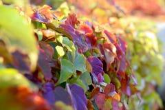 De samenstelling van de herfst Royalty-vrije Stock Afbeeldingen