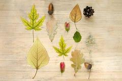 De samenstelling van de herfst De vaas met droog doorbladert, appel en kaarsen bij het ontslaan Patroon van eikels, droge bloemen royalty-vrije stock fotografie