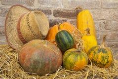 De samenstelling van de herfst van diverse pompoenen stock afbeelding