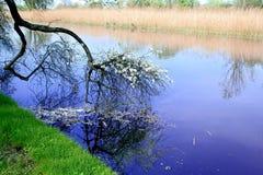 De samenstelling van de lente Royalty-vrije Stock Afbeeldingen