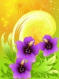 De samenstelling van de zomer met hibiscus Stock Fotografie