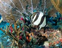 De Samenstelling van het koraalrif. Stock Afbeeldingen