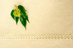 De samenstelling van de de lentebloem royalty-vrije stock foto's