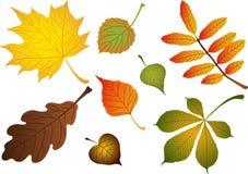 De samenstelling van vectoren van bladeren Royalty-vrije Stock Afbeeldingen