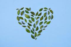 De samenstelling van de zomer Groene bladeren die in hartvorm worden geschikt over blauwe achtergrond Het concept van de liefde V stock afbeeldingen
