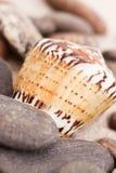 De samenstellingen van het strand. Shells op zand Royalty-vrije Stock Foto