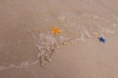 De samenstellingen van het strand. Shells op zand Royalty-vrije Stock Afbeelding