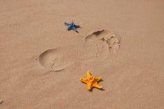 De samenstellingen van het strand. Shells op zand Royalty-vrije Stock Fotografie