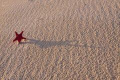 De samenstellingen van het strand. Shells op zand Royalty-vrije Stock Foto's