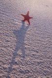 De samenstellingen van het strand. Shells op zand Stock Fotografie