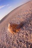 De samenstellingen van het strand. Shells op zand Stock Afbeelding