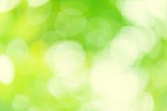 De samenvatting concentreert uit groene installatiekleur bokeh Stock Afbeeldingen