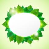 De samenvatting gaat groene vectorillustratie met doorbladert Stock Foto