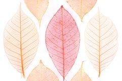 De samenvatting van bladeren stock afbeeldingen