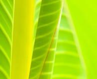 De Samenvatting van bladeren Stock Afbeelding