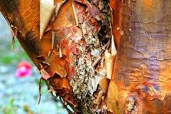 De Samenvatting van de boomboomstam Royalty-vrije Stock Fotografie
