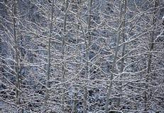 De Samenvatting van de Aard van de esp en van de Sneeuw Stock Afbeelding