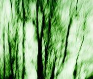 De Samenvatting van de boom Stock Fotografie