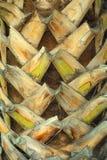De samenvatting van de palm Royalty-vrije Stock Foto