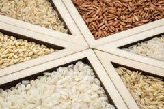 De samenvatting van de rijstkorrel Stock Fotografie