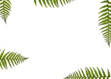 De Samenvatting van de varen vector illustratie