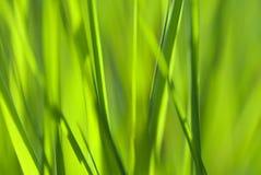 De samenvatting van het gras Stock Foto