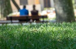 De samenvatting vertroebelde erachter opzettelijk beeld van een paar op een bank van met het groene scherp geconcentreerde gras i stock foto's