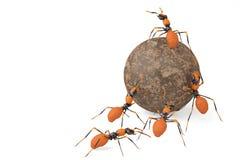 De samenwerking van het mierengroepswerk en steenbal 3D Illustratie royalty-vrije illustratie