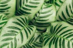 De sappige achtergrond van contrast groene bladeren Stock Afbeelding
