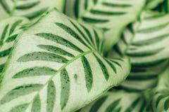De sappige achtergrond van contrast groene bladeren Stock Fotografie