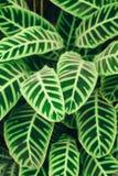 De sappige achtergrond van contrast groene bladeren Stock Foto