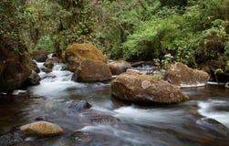 De Savegre-rivier in Costa Rica Stock Afbeeldingen