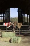 De Scène van de boerderij Stock Fotografie
