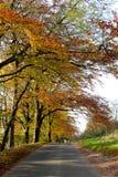 De scène van de herfst Stock Foto's