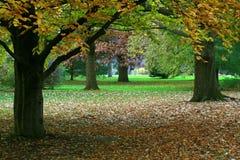 De Scène van de herfst. Stock Fotografie