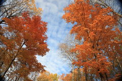 De Scène van de herfst Royalty-vrije Stock Afbeelding