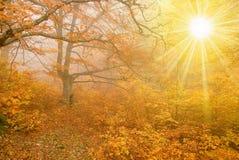 De scène van de herfst stock afbeeldingen