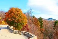 De scène van de herfst de kleurrijke achtergrond Royalty-vrije Stock Foto