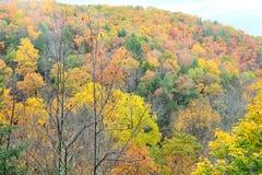 De scène van de herfst de kleurrijke achtergrond Royalty-vrije Stock Fotografie