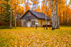 De scène van de herfst de kleurrijke achtergrond Stock Afbeelding