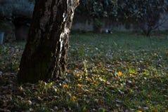 De scène van de herfst de kleurrijke achtergrond Stock Fotografie