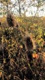De scène van de herfst de kleurrijke achtergrond Royalty-vrije Stock Afbeelding