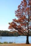 De scène van de herfst door een meer Stock Afbeeldingen