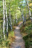 De scène van de herfst in rockies Royalty-vrije Stock Afbeelding