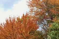 De scène van de herfstbladeren van het dalingsgebladerte Royalty-vrije Stock Foto's