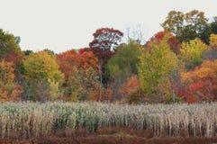 De scène van de herfstbladeren van het dalingsgebladerte Royalty-vrije Stock Afbeeldingen