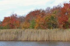 De scène van de herfstbladeren van het dalingsgebladerte Stock Foto