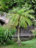 De Scène van de palm stock afbeelding