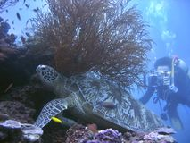 De Scène van de schildpad Stock Afbeelding